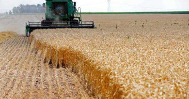 الشركة العامة لتجارة الحبوب تحدد أسعار شراء القمح لموسم 2018