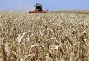 الكاظمي يستثني الفلاحين والمزارعين من حظر التجوال، لإنجاز حملة الحصاد والتسويق